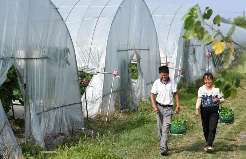 乡村振兴在路上——张俊友、程云夫妇:从贫困户到蔬菜种植能手