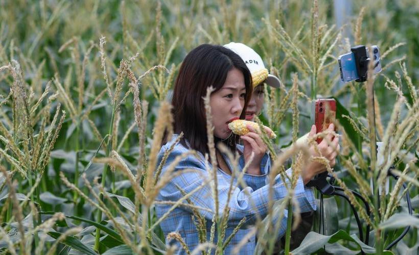 特色农旅产业助力乡村振兴